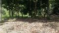 Kalumpang 4 acres, , Kerling