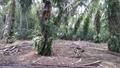 Kalumpang, 3.9 acres, , Kerling