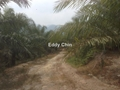 Palm Oil Land, Parit Tinggi, Seremban, Kuala Pilah, Seremban , Kuala Pilah