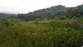 Batu Gajah Ipoh Perak, , Manong
