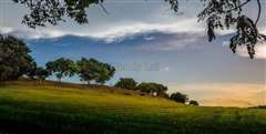 Leisure Farm - Palm Grove, Gelang Patah