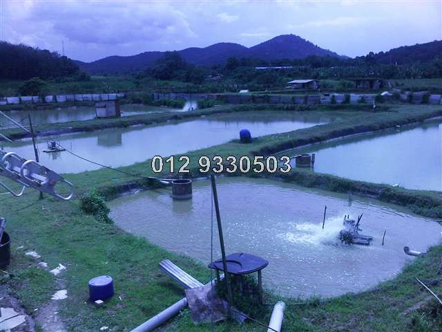 Agricultural land for sale in fish pond aquaculture for Fish pond business