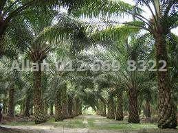 Sarawak